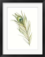 Watercolor Peacock Feather I Framed Print
