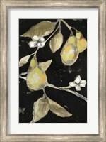 Framed Fresh Pears II