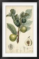 Framed Exotic Fruits I