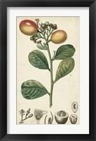 Framed Exotic Fruits II