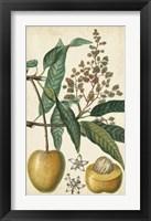Framed Exotic Fruits III