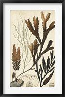 Framed Turpin Seaweed I