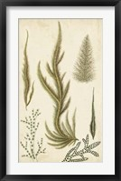 Framed Turpin Seaweed IV