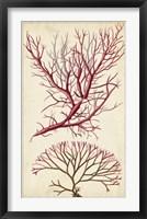 Framed Turpin Seaweed V