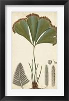 Framed Foliage Botanique I