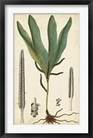 Framed Foliage Botanique II
