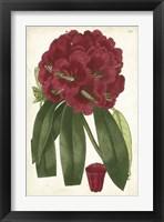 Framed Antique Rhododendron I