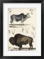 Framed Antique Cow & Bison Study