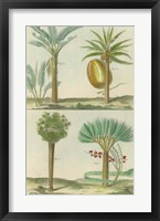 Histoire Naturelle Tropicals I Framed Print