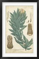 Framed Weinmann Conifers I