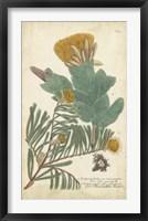 Framed Weinmann Conifers II