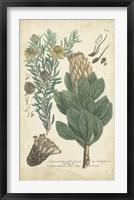 Framed Weinmann Conifers III