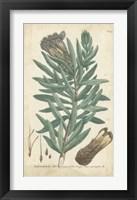 Framed Weinmann Conifers IV