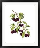 Framed Watercolor Cherries