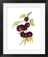Framed Watercolor Plums
