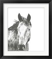 Framed Wildlife Snapshot: Horse I