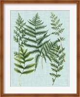 Framed Spa Ferns I
