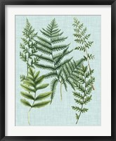 Framed Spa Ferns I