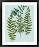 Framed Spa Ferns II