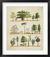 Arbor Sampler I Framed Print