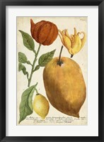 Exotic Citrus II Framed Print