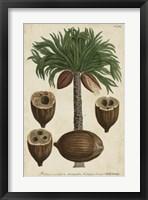 Framed Vintage Tropicals I