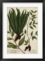 Framed Vintage Tropicals VI