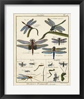 Histoire Naturelle Insects I Framed Print