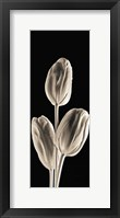 Framed Tulips (panel)
