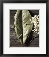 Framed Leaf