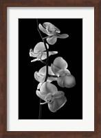 Framed Orchids 1