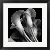 Framed Lillies2