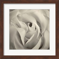 Framed White Rose