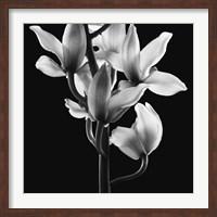 Framed Orchids 3