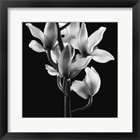 Framed Orchids 3