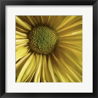 Framed Yellow Daisy