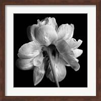Framed Flower Black and White