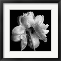 Framed Flower Black and White