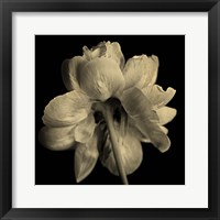 Framed Flower Sepia