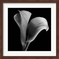 Framed Calla Lilies Black and White