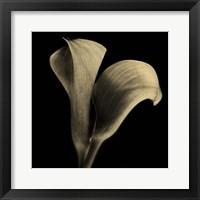 Framed Calla Lilies Sepia