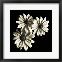 Framed Three Black-Eyed Susans