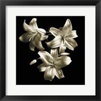 Framed Three Lilies