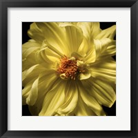 Framed Yellow Delight
