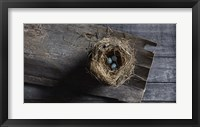 Framed Nest Eggs
