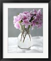 Framed Azalea
