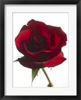 Framed Red Rose 2