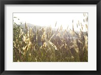 Framed Grimstad Wheat