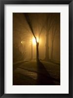 Framed Light Through The Mist