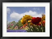 Framed Standing Flowers
